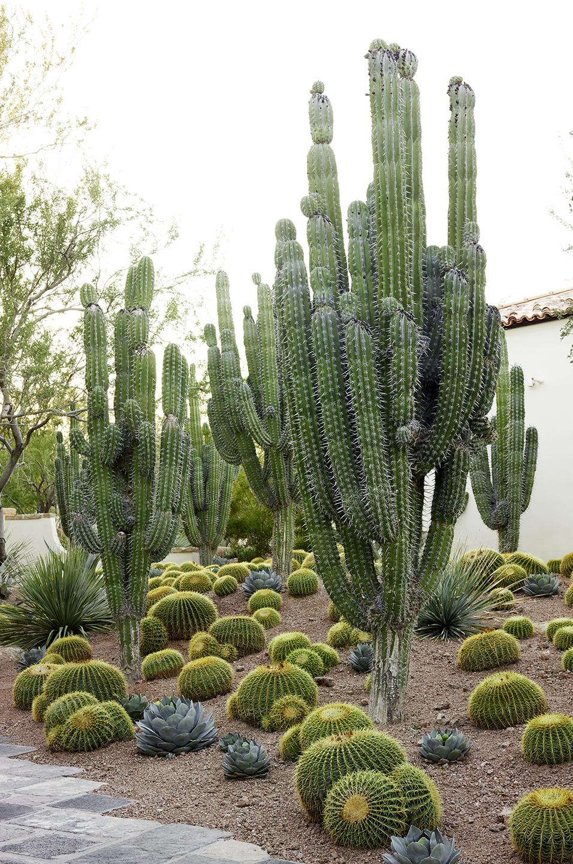 House of Desert Gardens